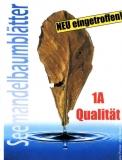 Seemandelbaumblätter 10 Stück XXL 18-30cm