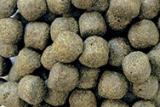 Profi -Futter 6% SPIRULINA  Alleinfuttermittel für Koi 6 mm 15kg